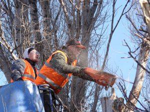 fakivágás emelőkocsival Budapest