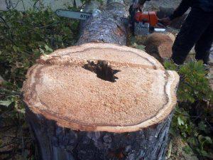 korhadt fa kivágása Budapest