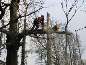 magas fák kivágása Budapest