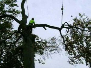 magas fa lebontása Szentendre