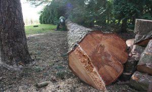 veszélyes fa kivágása Budapest